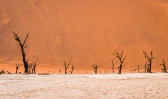 Namib4 (1 of 1)